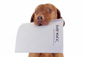 my dog ate my homework greg bustin executive leadership blog