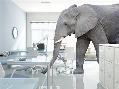 greg bustin executive leadership blog no more elephant in the room