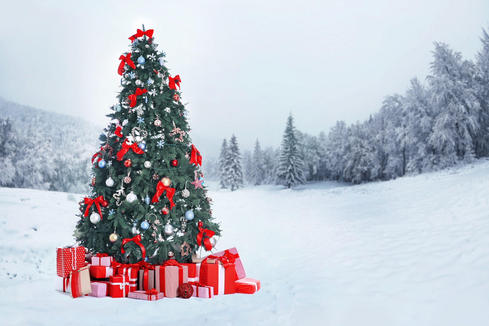 12 days of christmas fun and reflection